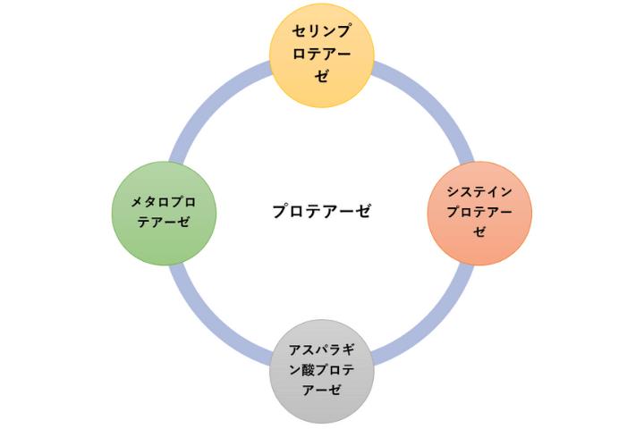 プロテアーゼインヒビターの種類と役割