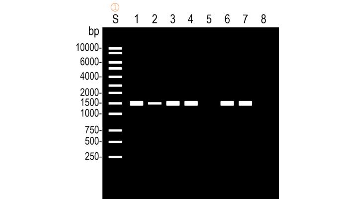 PCRの結果を確認する