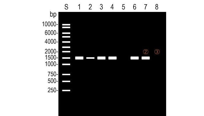 PCRの結果でPCをチェックする