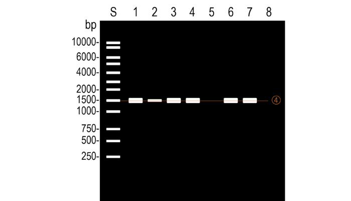 PCRの結果を比較する