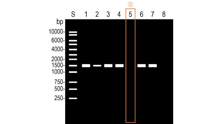 PCRでバンドがでない